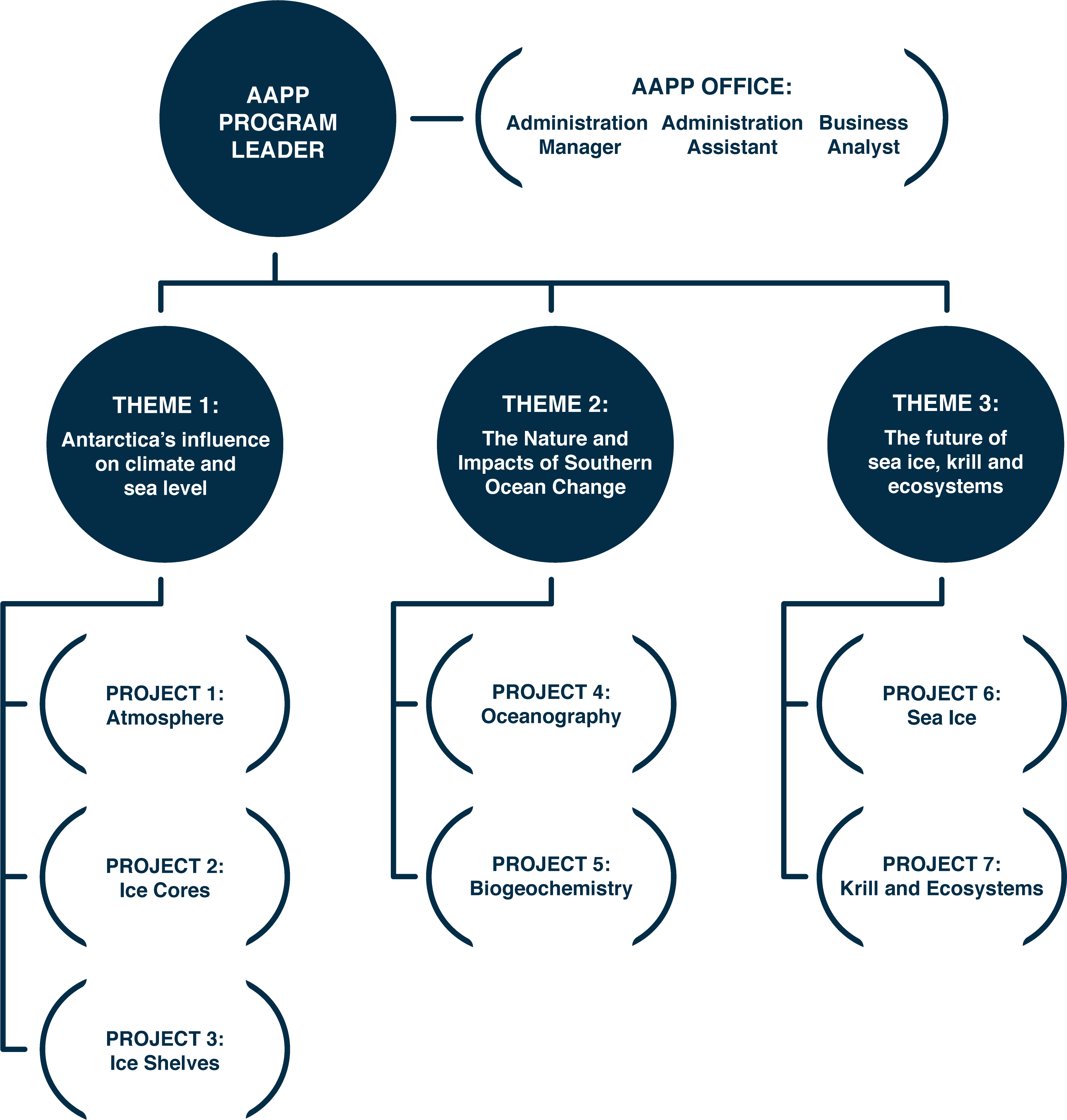 AAPP Org chart for website